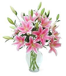 Expressive Pink Lilies
