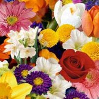 Add 14 stems of seasonal flowers to your flower order