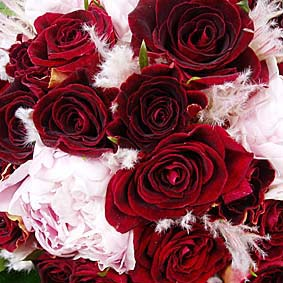 Adorable Scarlet Red Roses